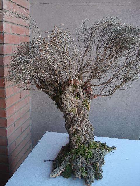 Forum del presepio elettronico multimediale piante di ulivo for Acquisto piante ulivo
